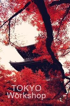 Tokyo - Elie Apisa http://elie-apisa.com/tokyo/